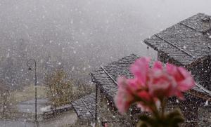 Neige début de l' hiver