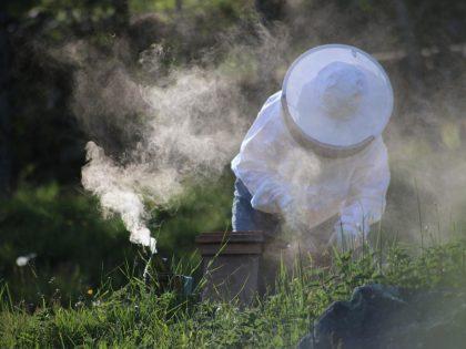 Les abeilles quittent la ruche